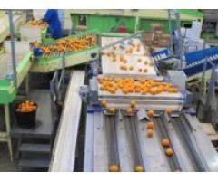 Sortowanie owoców i warzyw